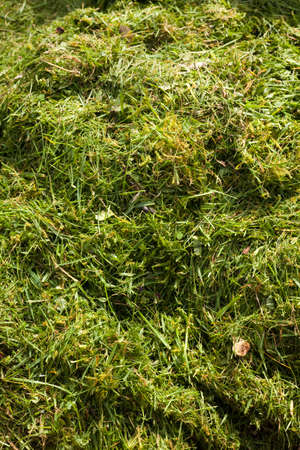 Background of green grass cuttings