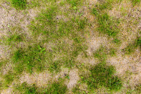 Patchy grass lawn with parched areas and weeds