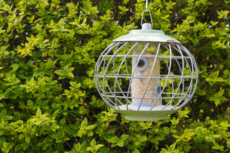 Round bird feeder with squirrel protection - copy space provided