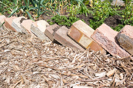 Bricks used as egding to a planted area on an allotment Stockfoto