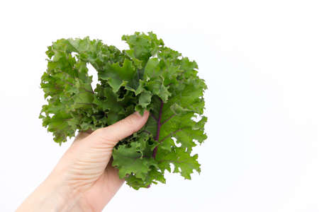 Person holding freshly picked kale leaves against a white background