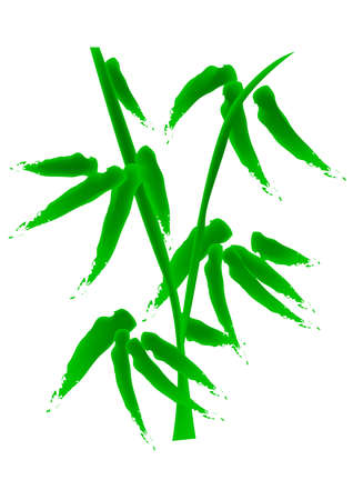 bamboo, vector, illustration, specially for chinese new year, means growth, improve.