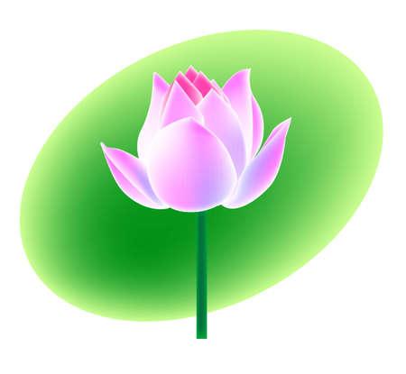 lotus flower, vector, illustrator, artistic drawing Vector