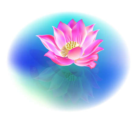 lotus flower and reflection, vector, illustrator, artistic drawing Illustration