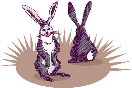 back view: illustration, vector for two rabbit with front and back view