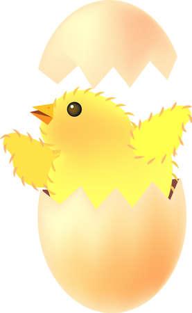 eggshells: ilustraci�n vectorial para una chica nacieron a partir de la c�scara de huevo Vectores