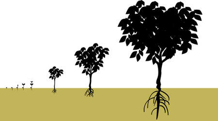vector illustration for a growing process from a seed becomes a tree, biological environment.