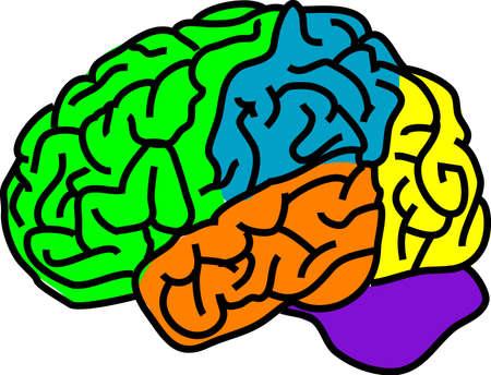 separato: illustrazione vettoriale di un cervello anatomia a colori separati