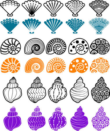 vector illustration for shell pattern design element.  Illustration