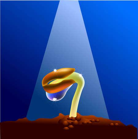 Illustration vectorielle pour un processus de croissance à partir d'une graine de bourgeon