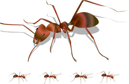 crawling creature: Ant  Vectores