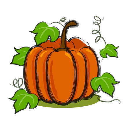 illustration for pumpkin with vines in art brush and isolated in white background. Stock Illustration - 11340052
