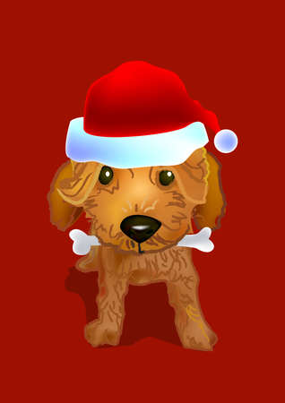a brown poodle doggy wear a santa red hat and bite a bone in its mouth.