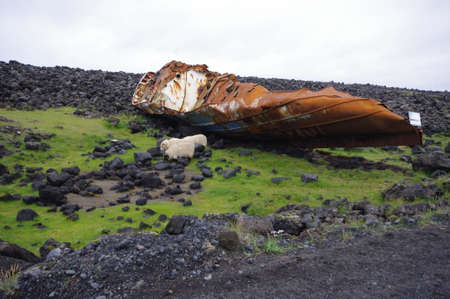 Wreck guarded by sheep