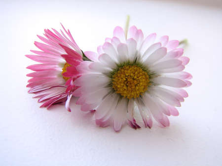 roze: Soft springflowers Stock Photo