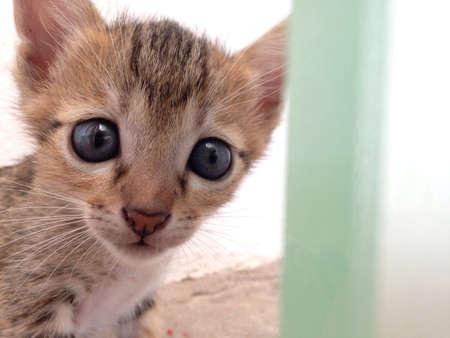 eye: Little Cat