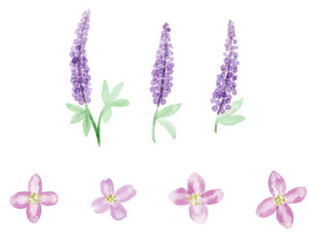 It is a watercolor style illustration of lupine and dogwood. Çizim