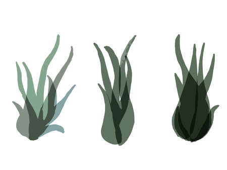 It is a stylish illustration of Air  Plants.It is a stylish illustration of Air Plants.