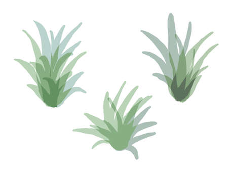 It is a stylish illustration of Air  Plants.It is a stylish illustration of Air  Plants. Çizim