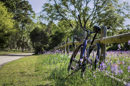One purple beach cruiser bike with basket rests on a wood split rail fence in a field of orange and purple wildflowers on a sunny day. Lifestyle and leisure concept. Stock Photo
