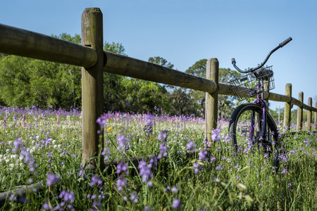 A field of purple, pink, orange and white flowers with a split rail, wooden fence and a vintage purple beach cruiser bicycle with a wire bike basket on a sunny, blue sky day. Stock Photo