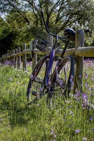 A purple bike with a basket is leaning on a wooden, split rail fence in a garden of purple wildflowers and pink flowers on a sunny spring or summer day. Travel or leisure concept. Stock Photo