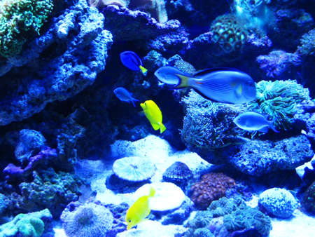 Beautiful fish near corals in the deep blue sea   Stock Photo - 8862703