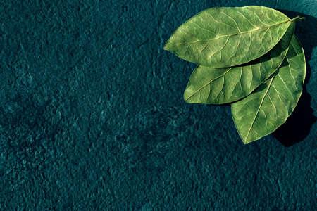bay leaves on blue background. Stockfoto