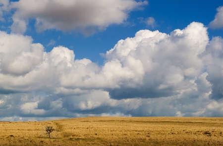 vlakte, eenzame boom dartmoor Stockfoto