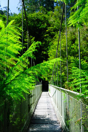 tarra bulga fern forest suspension bridge