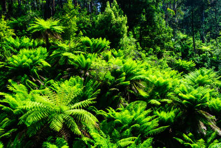 tarra bulga national park australia fern forest
