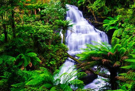 waterval otway nationaal park australië Stockfoto