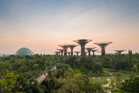 to dominate: Singapore - March 18, 2016 : Supertrees are tree-like structures that dominate the Gardens landscape with heights that range between 25 metres (82 ft) and 50 metres (160 ft). Editorial