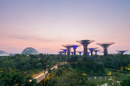 to dominate: Singapore - March 18, 2016 : Garden by the bay at sunrise.Supertrees are tree-like structures that dominate the Gardens landscape with heights that range between 25 metres and 50 metres.