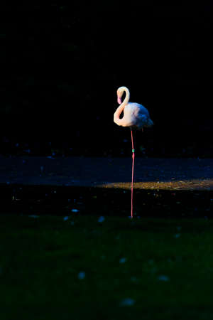 A low-key photo of a flamingo standing on one leg