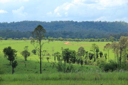 savanna in Thailand photo