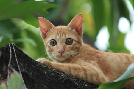 waiting posture: stripe orange cat on the tree