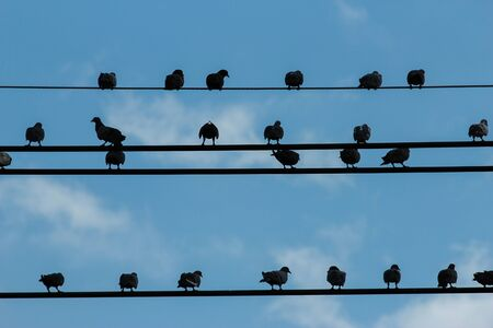 birds on a wire: Birds on a wire