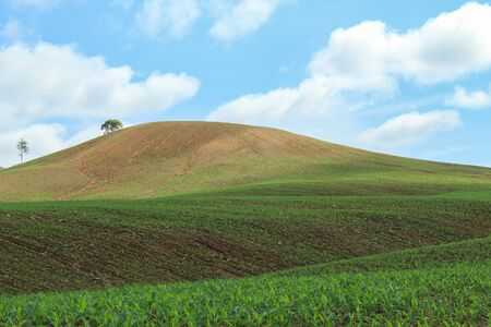 field crop: Crop Field on the  hill and nice blue sky