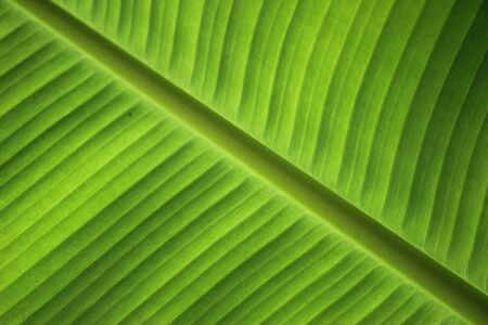 leaf illustration: Green leaf background