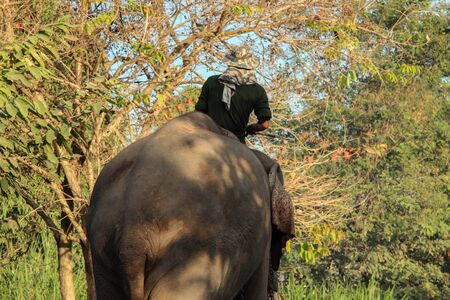 mahout: Elephant and  mahout Stock Photo