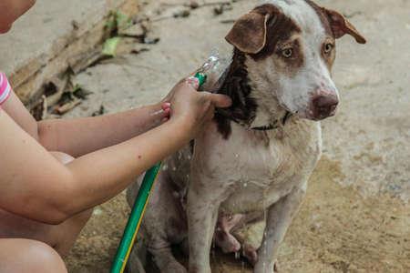 bathe: Bathe a dog
