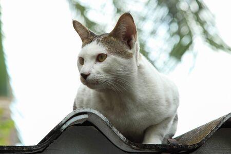 지붕에 고양이