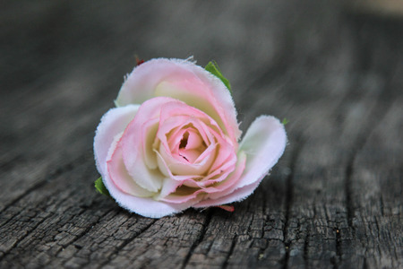 핑크 장미 나무 배경, 인공 꽃 배경