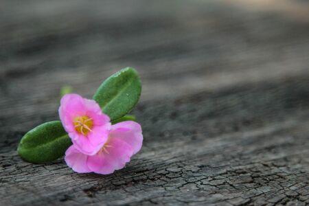 나무 배경에 핑크 꽃