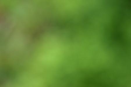 녹색 배경 흐림