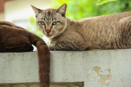 갈색 호랑이 스트라이프 고양이 울타리에 그의 친구와 함께 누워