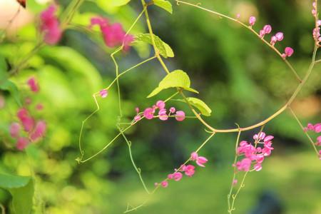 핑크 꽃과 녹색 나뭇잎 배경 흐림