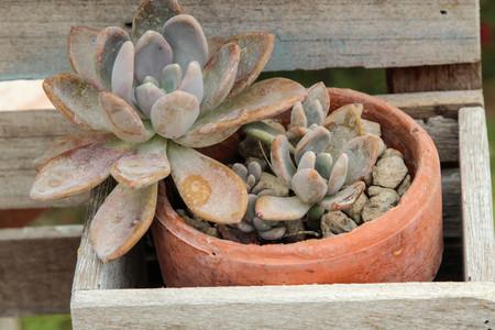 꽃 냄비에 즙이 많은 식물  정원 장식