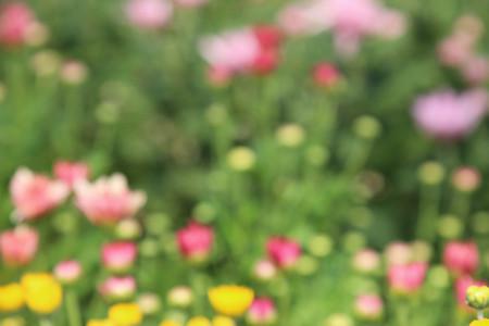 화려한 꽃 배경을 흐리게